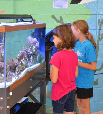 Two young girls observe a fish tank.