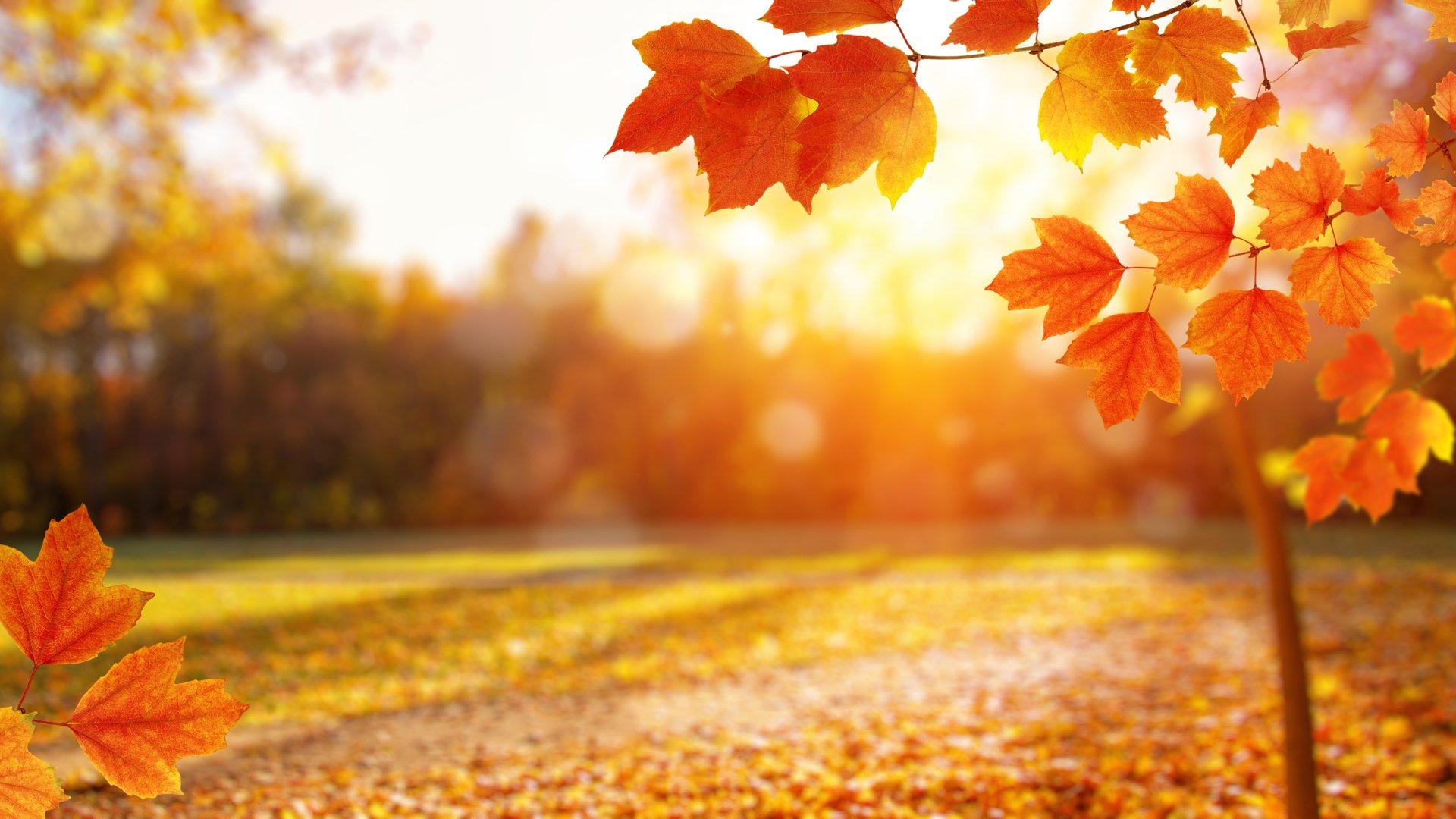 Fall Leaves at Sunrise