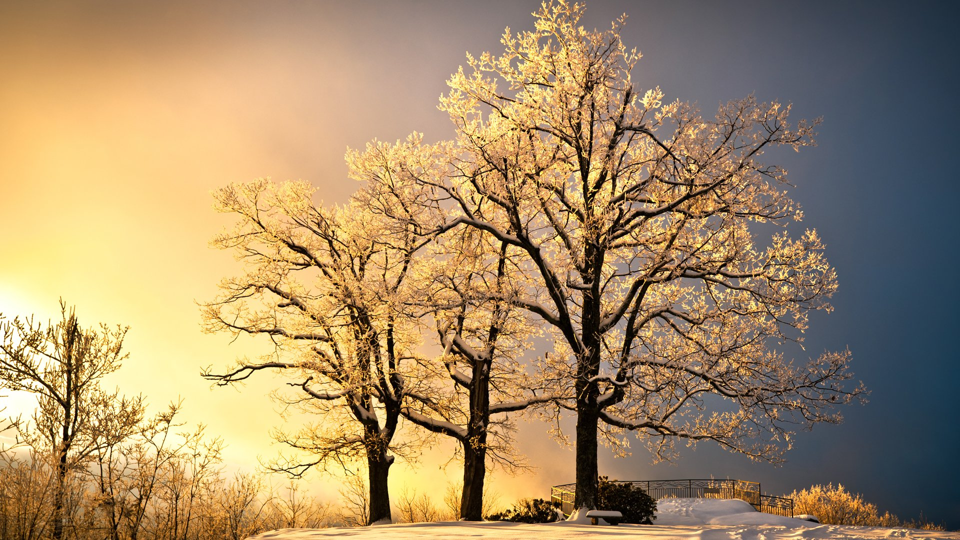 Trees in winter with sun behind